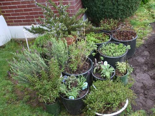 container herb garden