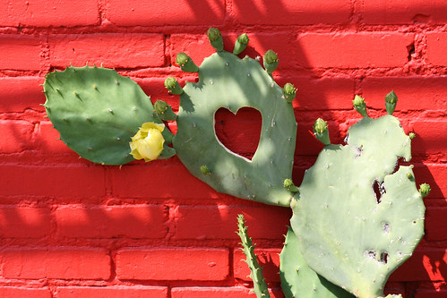 a prickly heart that blooms