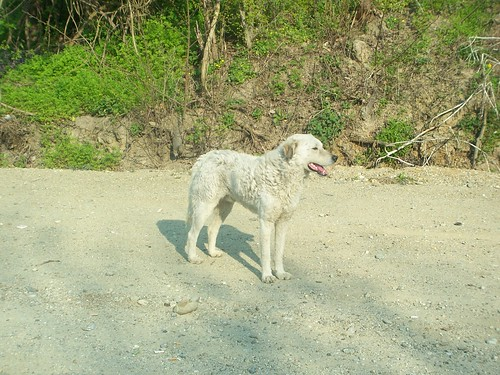 Perro al lado de una carretera cercana a Reşiţa, en la región de Banat