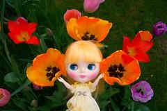Tulips as large as a Blythe's head!