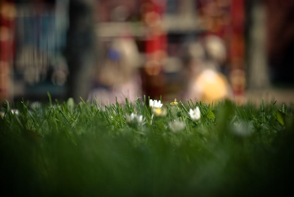 springwalk-29