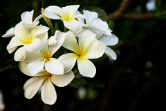 Open debate (Falling Dreams) Tags: park india white flower green nature canon evening flickr indian indians hyderabad hpc   hyderabadi   sanjeevaiah   canon40d fallingdreams hamarahyderabad