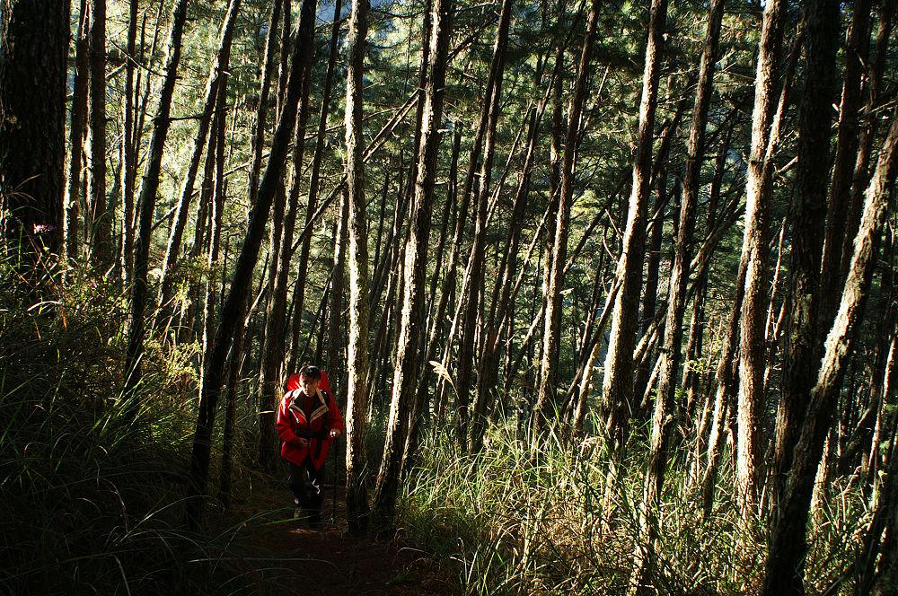 南湖大山day2-06 林間光耀