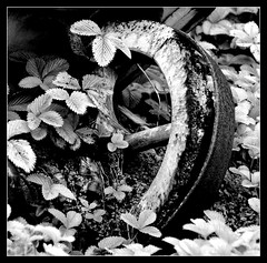 Wheel of good fortune (philwirks) Tags: new bw public wheel interesting cornwall random picnik myfavs luminosity philrichards beautifuldecay show08 unlimitedphotos