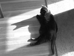 IMG_0091 (Woodswoman33) Tags: shadow jinx