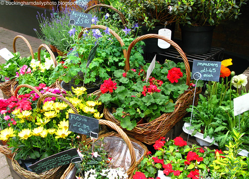 flowers in baskets...