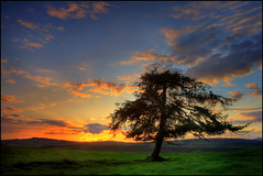 Drimmie Tree @ Sunset (angus clyne) Tags: sunset mountain tree grass scotland standingstones wind farm heather hill perthshire lone larch windfarm stonecircle blairgowrie megalith alyth standingstone clich flikcr mooe bridgeofcally drimmie colorphotoaward drumderg scotspinetree saariysqualitypictures mountblair drumdergwindfarm forestofalyth butilikeagoodclich obramaestra
