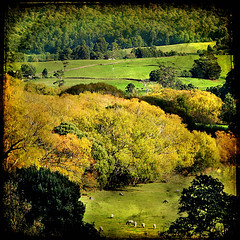 Baa Baa valley (shastadaisy~) Tags: trees nature landscape bravo sheep tasmania fields magicuniverse magicunicorntheverybest magicunicornmasterpiece