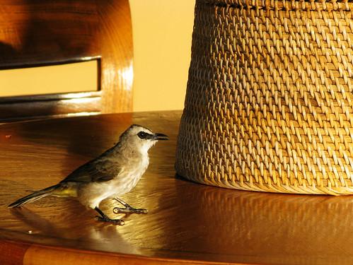 早起的鳥兒佔餐桌
