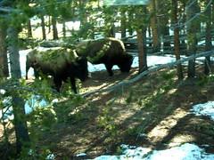 Yellowstone Park (Russell Adams) Tags: usa holiday yellowstonepark usaholidayyellowstonepark