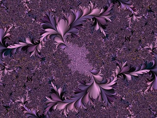purplefeathermoire