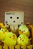 Danbo & les poussins (Zaskars) Tags: easter toy pentax sigma 1770 jouet pâques yotsuba danbo poussins revoltech k10d danboard