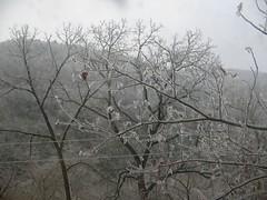 Mount Obergammergau (junebug_1944) Tags: icestorm eurekaspringsar january2009