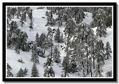 trees & snow (Polis Poliviou) Tags: morning trees winter sky white mountain snow cold tree nature beautiful weather pine clouds forest canon wonderful landscape eos frozen photo flickr frost skiing cyprus pines snowboard february olympos snowglobe polis troodos nicosia naturesfinest supershot specland excellentscenic mediterraneanpines mediterraneanpine poliviou polispoliviou cypruspine troodospine