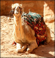 Have a smiling day my Friend :))) (Bea Kotecka *Come back :) *) Tags: portrait animals petra camel jordania thetreasury alkhazneh canoneos30d photosexplore beakoteckaphotography