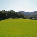 The Meadow at Filoli thumbnail