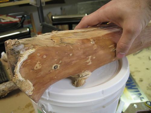 paperbark limb