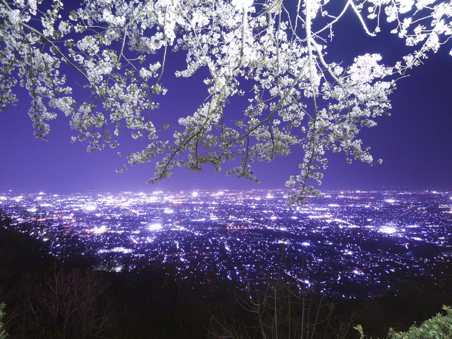 桜'09武田の杜ライトアップ : 盆地の夜景を俯瞰する。