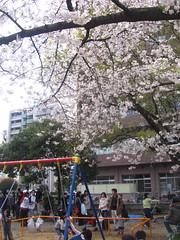 お花見(20090404・土佐稲荷神社)