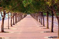 A different angle for the same trees , Arabian Gulf Street, Near the kuwait towers (Saad Al-Enezi) Tags: tree green beauty nikon dof secret kuwait saad d90 blueribbonwinner otw supershot arabiangulfstreet sometrees flickraward nikonflickraward nearthekuwaittowers alenzisaad