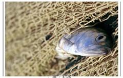 (matiya firoozfar) Tags: fish iran captive matiya firoozfar  matiyafiroozrar