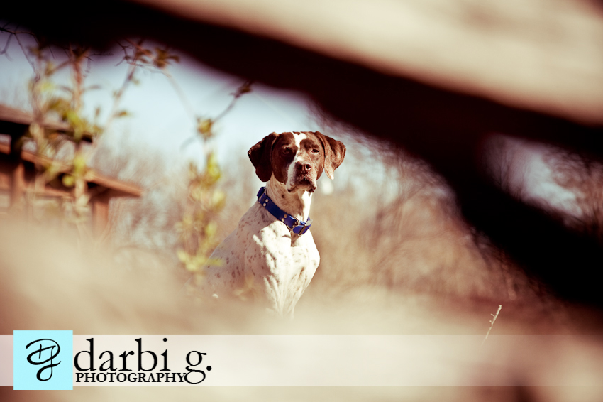 Darbi G photography-dog puppy photographer-_MG_1081