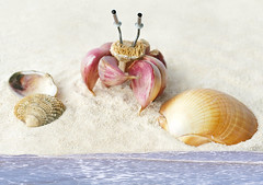 Garlic Crab (RR) Tags: sea food playing silly art water goofy fun mar still mediterranean mediterraneo with flavor humor crab garlic spicy nothing now ail allium seriously siri aglio anthropomorphic knoblauch alho playingwithfood cangrejo ajo granchio crabe anthropomorph  antropomrfico  sativum partofthe ireallydo ilovegarlic antropomorfico anthropomorphe taschenkrebs temperado    afterthisshot     butmyhands wheresmelling likegarlicfor over3days takesthat smellawayi spreadhumorcoalition brincandocomacomidablog