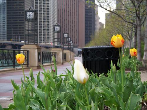4.26.2009 Chicago (113)