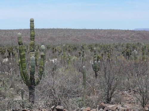 ... y Más cactus por ti.