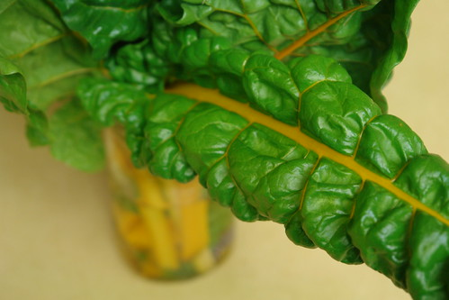 A Bouquet of Chard
