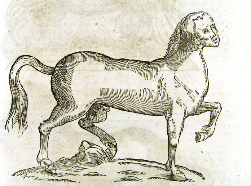 minotaur-head-horse-engraving