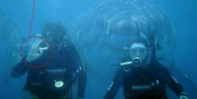 sharkthink