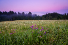 + foggy_hills (david.richter) Tags: sky nature wet grass fog clouds canon germany landscape deutschland photography eos rebel europa europe raw purple outdoor saxony violet sachsen wildflowers waterdroplets hitech lowclouds holder xsi meadowcranesbill superwideangle onblack erzgebirge geraniaceae cokin geraniumpratense gnd hardedge wondersofnature singleexposure ishootraw oremountains nohdr nonhdr 2stop 450d viewonblack lightningandthunder zpro gradualneutraldensity rebelxsi tokina1116mmf28atx116prodx germanybest