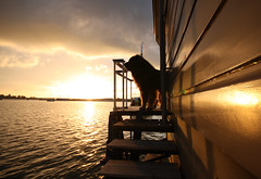 Elvis surveying the sunset (milliped) Tags: sunset dog elvis leonberger woef buitenij