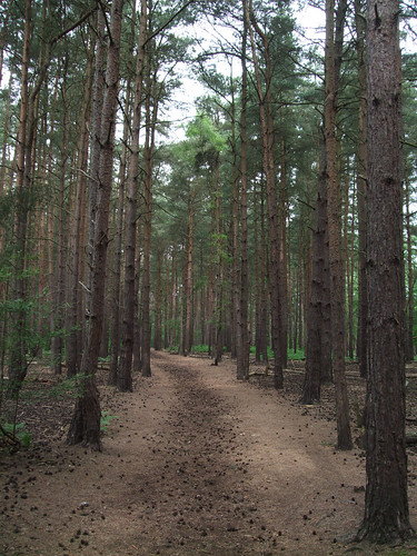 horsellcommon-path