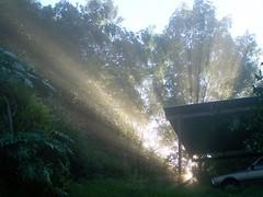 ( ^ O ^ ) (YAZMDG (15,000 images)) Tags: trees light mist forest sunrise landscape nsw rays yaz hinterland northernrivers rainbowregion nswrfp yazminamicheledegaye yazmdg