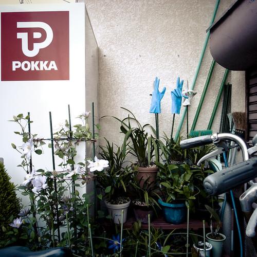 Two Pokka Gloves