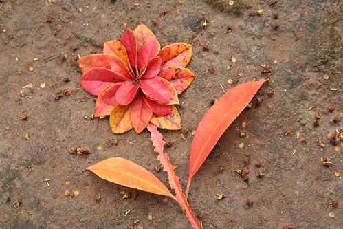"""Leaves As Flower """"Land Art"""""""