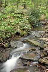 Long Exposure Scott Run Trail Creek