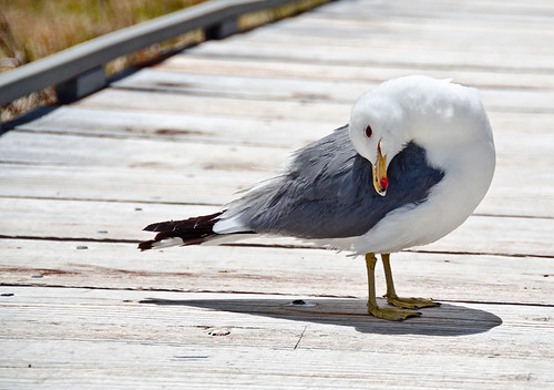 Gull at Mono Lake