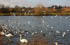 birds at Watermead Park