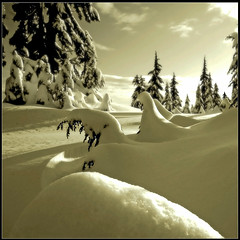 Bended Snow (Christopher J. Morley) Tags: trees winter white mountain snow snowshoe soft bc hiking curves seymour anawesomeshot favemegroup5 littlestoriespicswithsoul 100commentgroup howdidmycompanionsmissthis