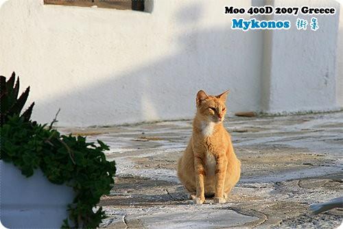 Mykonos 黃貓
