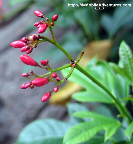 IMG_7040-Tiny-red-buds-macro-disney-Animal-Kingdom