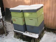 Hive Mind Beekeeping