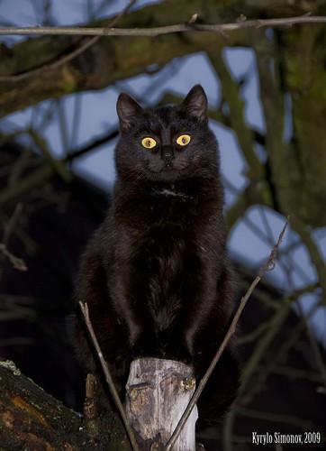 Kitten sitting on the tree