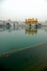Golden Temple (~FreeBirD~) Tags: manibabbar maniya love freebird lovemax free fishes pond goldentemple gurudwara amritsar colors contrast cold winters january chill golden gold water reflections reflection mb stairs india colorsofindia indyeaah indyeah incredibleindia architecture stunning simple true awesome brilliant sikh religious waters prayers offerings