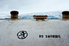 No Smoking Penguins
