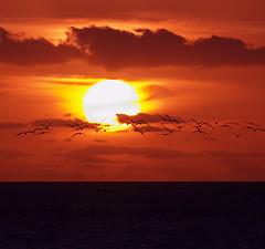 (Edgar Barany) Tags: ocean trip travel sunset sea sky usa naturaleza sun color bird beach nature water beautiful birds clouds atardecer nikon key paradise edgar tropic d200 vacations nikond200 barany abigfave anawesomeshot citrit edgarbarany