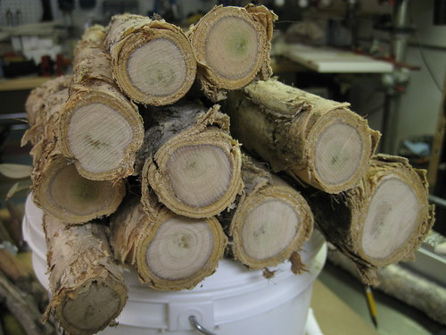 cross sections of paperbark limbs